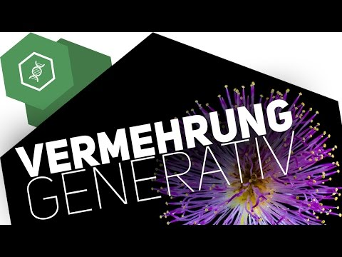 Fortpflanzung & Entwicklung   RAAbits Online