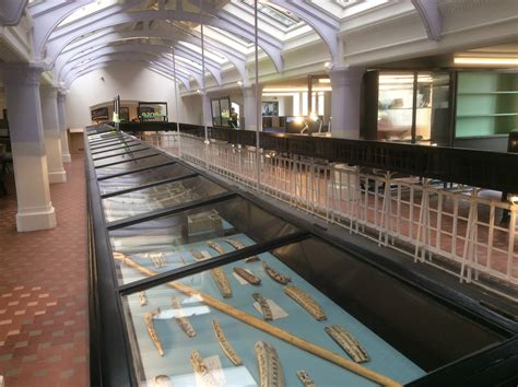 Sneak preview at the Study- Manchester Museum's new area